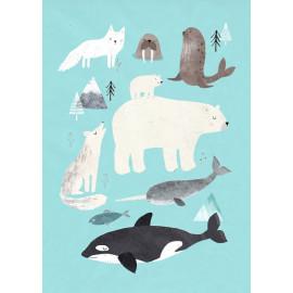postkaart - Artic animals